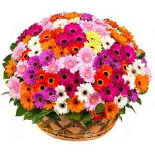 75 Mix colour gerberas basket