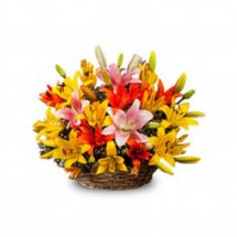 10 Mixed colour lilies in basket