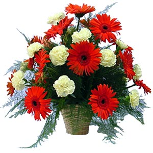 18 red Gerberas and white carnations arranged in a basket.