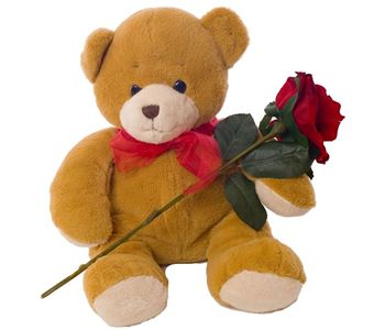 A 12 inch teddy with a single red rose
