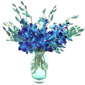 10 Blue orchids arranged in a vase
