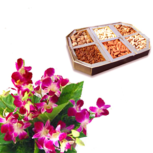 6 Orchids + 1 Kg Dry fruits