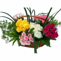 50 multi coloured roses basket