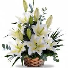 10 white lilies in basket